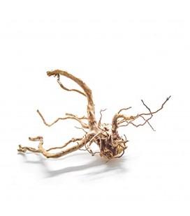 Blu Bios legno azalea rootmedio