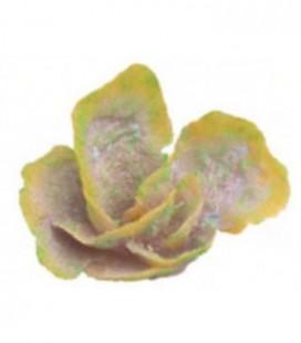 Giumar decorazione in resina corallo 16,5x10.11 cm