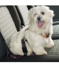Ferplast dog safety belt cintura di sicurezza per can