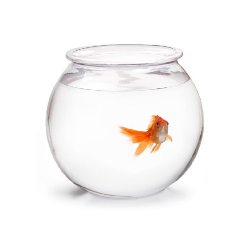 Boccia in vetro di boemia for Pesci per laghetti esterni