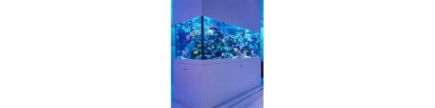 Vasche acquari su misura professionali artigianali punto for Acquari artigianali prezzi