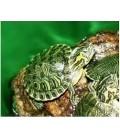 Invertebrati & rettili acqua dolce
