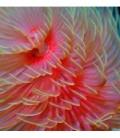 Fiori di mare (crinoidi, sabelle & spirografi)