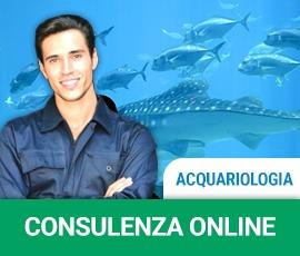 Consulenza acquariologia